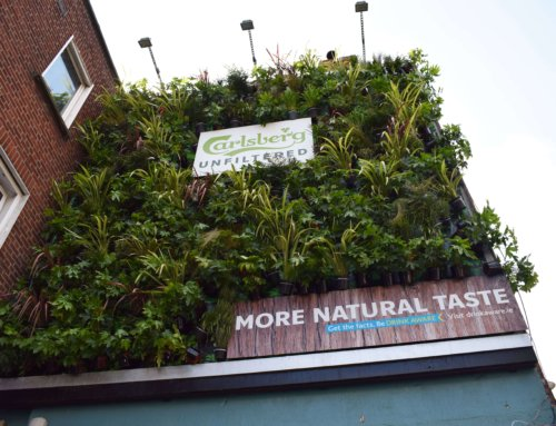 CARLSBERG UNFILTERED WILL DONATE GREENERY TO DUBLIN 8
